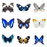 蝴蝶的收集在一个空白背景的 免版税库存图片