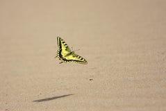 蝴蝶的飞行 免版税库存照片