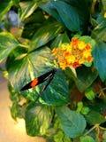 蝴蝶着陆 库存照片