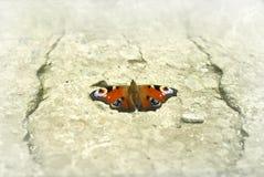 蝴蝶石头 图库摄影
