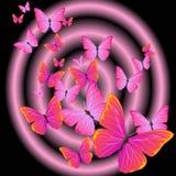 蝴蝶紫色 库存例证