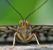 蝴蝶纵向 库存照片