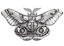 蝴蝶纹身花刺艺术 Dotwork纹身花刺 Antherina suraka 马达加斯加舷窗飞蛾 图库摄影