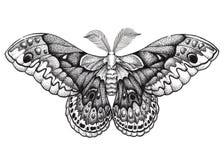 蝴蝶纹身花刺艺术 Dotwork纹身花刺 Hyalophora种植 大蚕蛾 自由,自然,秀丽,完美的标志 免版税库存照片