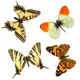 蝴蝶组 免版税库存图片