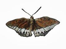 蝴蝶绘画 免版税库存照片