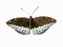 蝴蝶绘画 库存照片