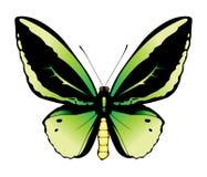 蝴蝶绿色例证 免版税库存图片
