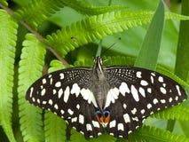 蝴蝶绿色叶子 图库摄影