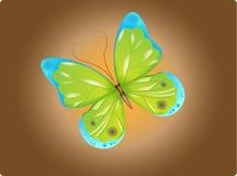 蝴蝶绿色 库存照片