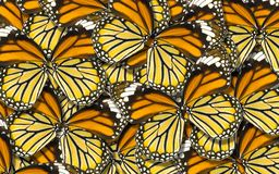 蝴蝶翼背景抽象自然背景宏指令  图库摄影