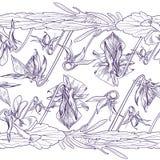 蝴蝶花无缝的边界  免版税库存照片