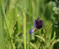 蝴蝶花花 库存照片