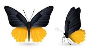 蝴蝶详细要素 前和侧视图 免版税库存照片