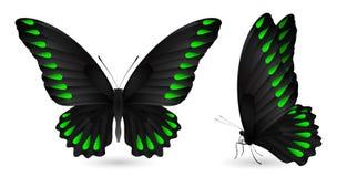 蝴蝶详细要素 前和侧视图 免版税库存图片