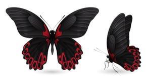 蝴蝶详细要素 前和侧视图 库存图片
