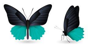 蝴蝶详细要素 前和侧视图 皇族释放例证
