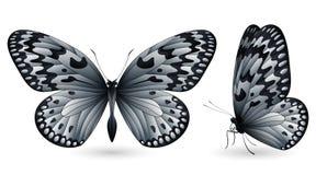 蝴蝶详细要素 前和侧视图 库存例证