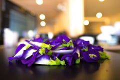 蝴蝶豌豆花,这朵花能在有泰国的点心的色料蓝色和紫色颜色 免版税库存照片
