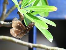 蝴蝶运动在飞行中对花 免版税库存照片