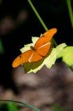 蝴蝶金子绿色 免版税库存图片