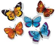 蝴蝶集 免版税库存照片