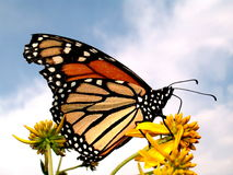 蝴蝶颜色本质 图库摄影