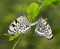 蝴蝶风筝联接的纸张 库存图片