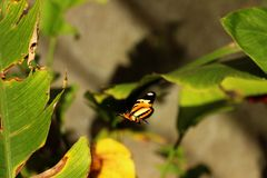 蝴蝶飞行和植物 库存图片