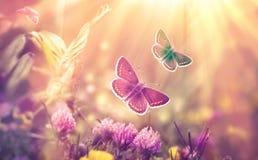 蝴蝶飞行在三叶草-美好的自然,秀丽草甸本质上 免版税库存图片