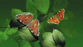 蝴蝶飞行 库存照片