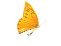 蝴蝶黄色 免版税图库摄影