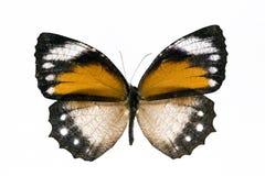 蝴蝶黄色 库存照片
