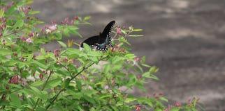 蝴蝶,布什,花,外面 免版税库存照片