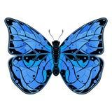 蝴蝶 蓝色美丽的昆虫 免版税库存照片
