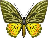 蝴蝶 库存例证