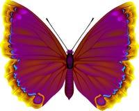 蝴蝶 向量例证