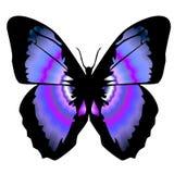 蝴蝶11 免版税库存照片