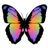 蝴蝶13 免版税库存图片