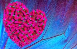 蝴蝶morpho的红色心脏以morpho翼为背景的 免版税库存照片