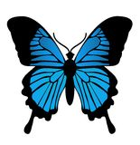 蝴蝶。传染媒介例证 免版税图库摄影