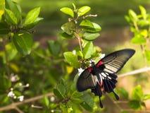 蝴蝶。 图库摄影