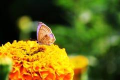 蝴蝶一点 免版税图库摄影