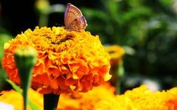 蝴蝶一点 免版税库存照片