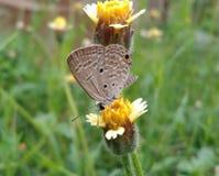 蝴蝶一点 库存图片