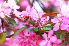 蝴蝶下落花卉花重点模式黄色 苹果开花关闭深度域浅 库存照片