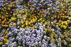 蝴蝶下落花卉花重点模式黄色 免版税库存图片
