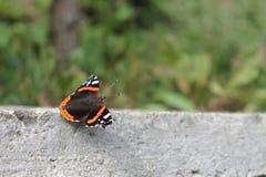 蝴蝶世界在红色书被列出 图库摄影