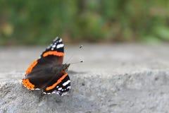 蝴蝶世界在红色书被列出 免版税库存图片
