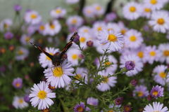 蝴蝶世界在红色书被列出 免版税库存照片